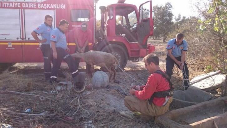 Kuyuya Düşen Küçükbaşlar  İtfaiye Tarafından Kurtarıldı