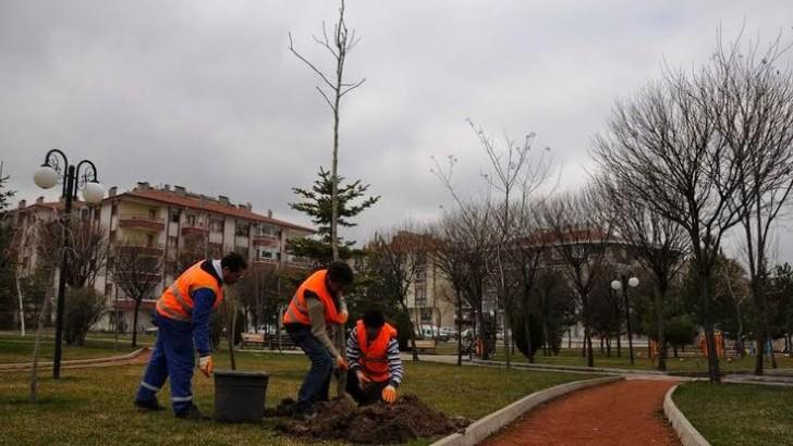 Edremit'te Ağaçlar Kuaförden Çıktı