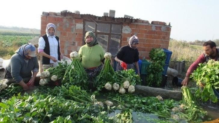 Kışlık Sebzeler Geçim Kaynağı Oldu